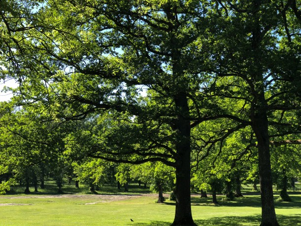 The more natural section of the gardens. Love these trees.