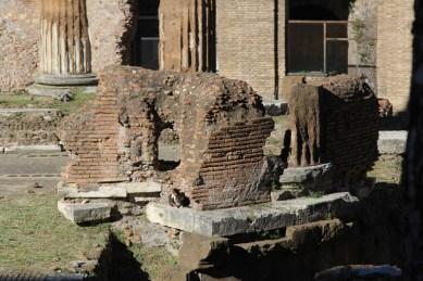 Roman Brickwork (and cat)