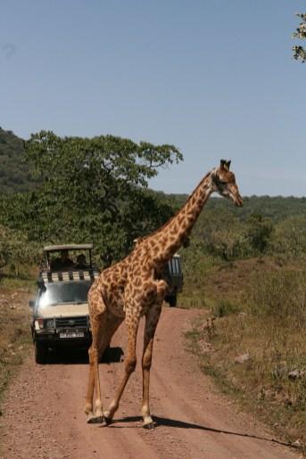 Arusha National Park, Tanzania
