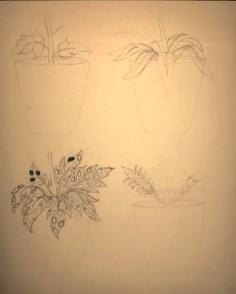 Study for 'Flower Pot': Leaf Designs 1960
