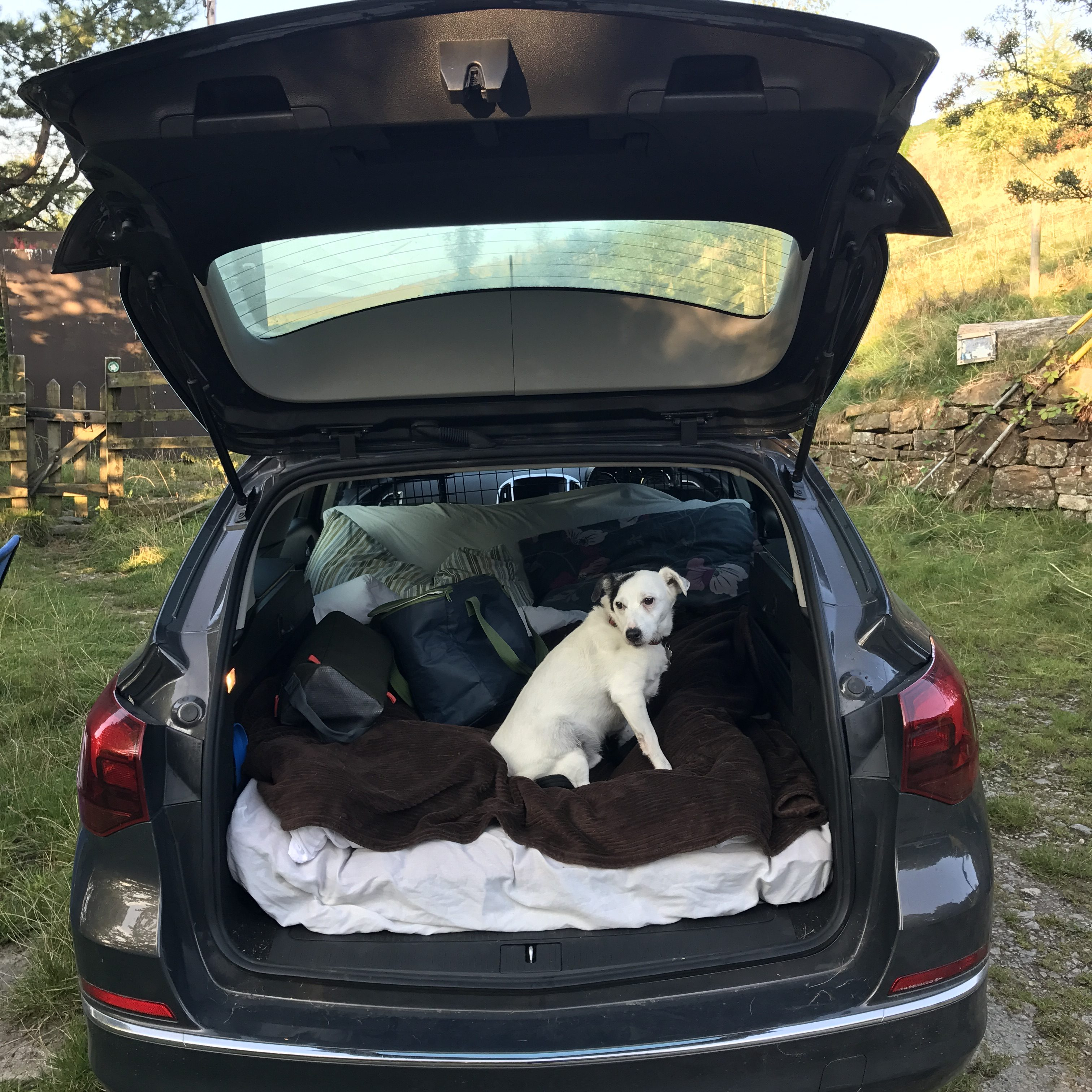 One man and his dog go car camping