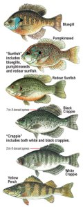 common Panfish