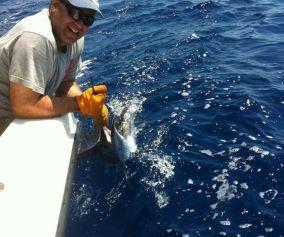 Reviving Sailfish