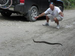 snake wrangling
