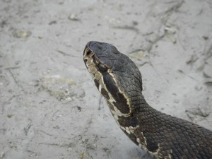 Name the Snake?