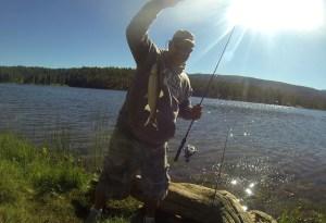 Lake Haviland Rainbow Trout