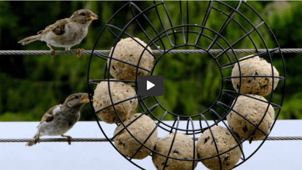 Easy Way To Feed Birds At Home