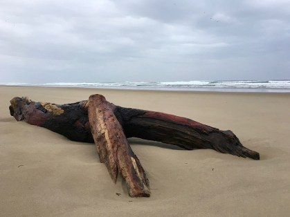 Drift log on a lonely beach, surf in the background