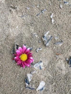 Lost flower in the drift line