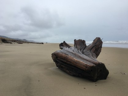root end of a large drift log on deserted beach