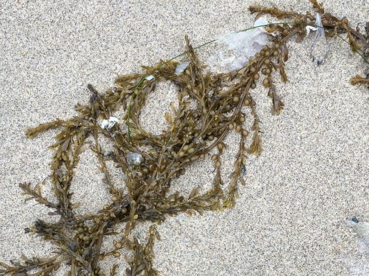 drift fragment on sand