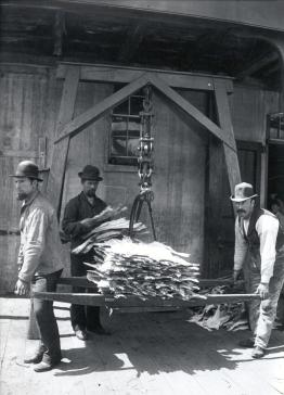 Weighing fish, Tessier's warehouse