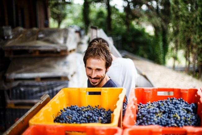 San Gimignano's winery 2