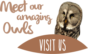 Adopt our amazing owls