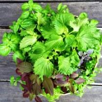 A Bouquet of Living Herbs.