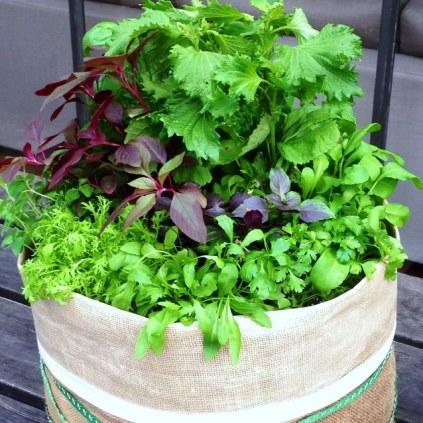 My Hessian Herb Garden