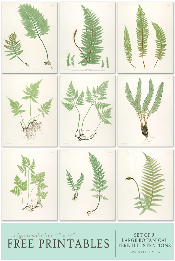 Free Fern Printables | The Painted Hive