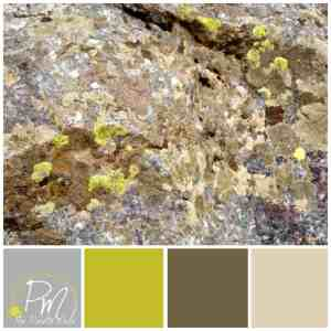 Lichen Palette