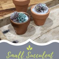 Small Succulent teacher gifts