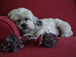 Puppy Love 2 | ©Tom Palladio Images