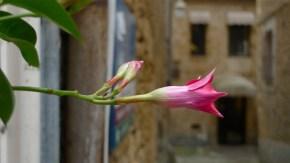 Sarlat, France   ©Tom Palladio Images
