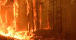 NASA: Forest fires have declined 25% over last 16 years