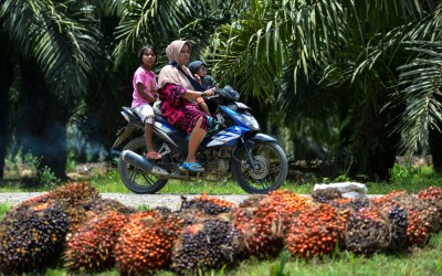 SIIA: EU Move on Palm Oil is Counter Productive to Sustainability