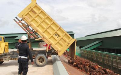 ANJ Tests its Palm Oil Mill in West Papua