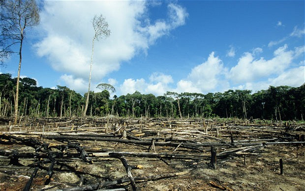 Omnibus Law could impact deforestation