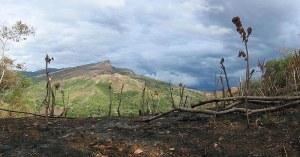 permasalahan deforestasi