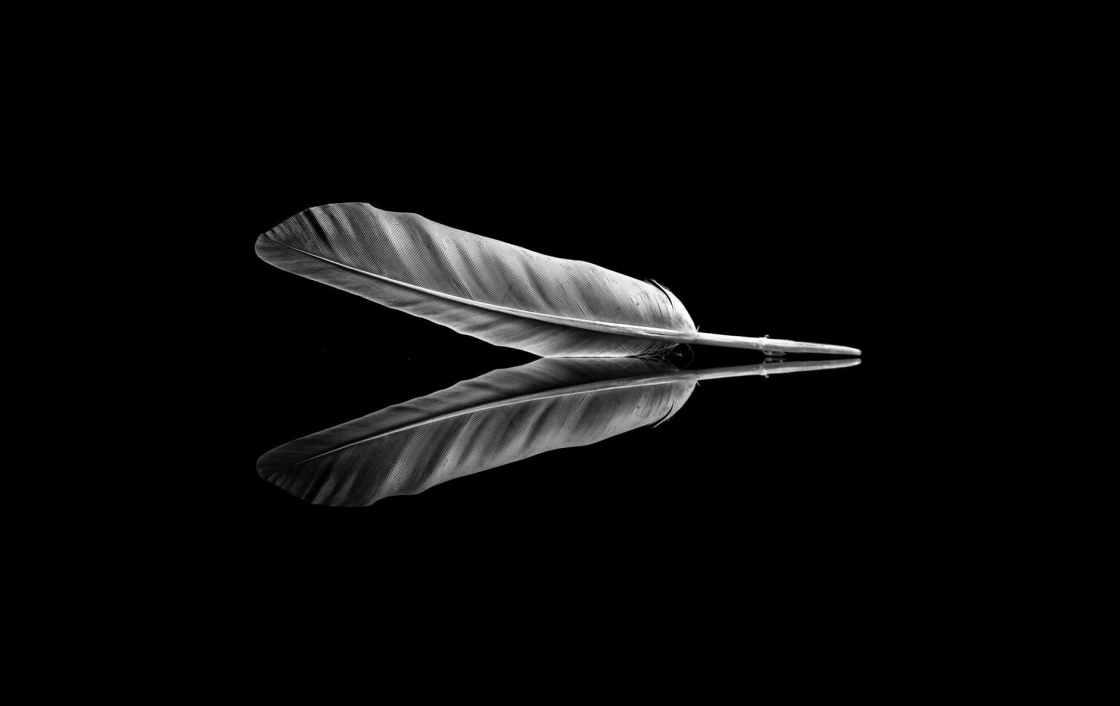 light flight bird art