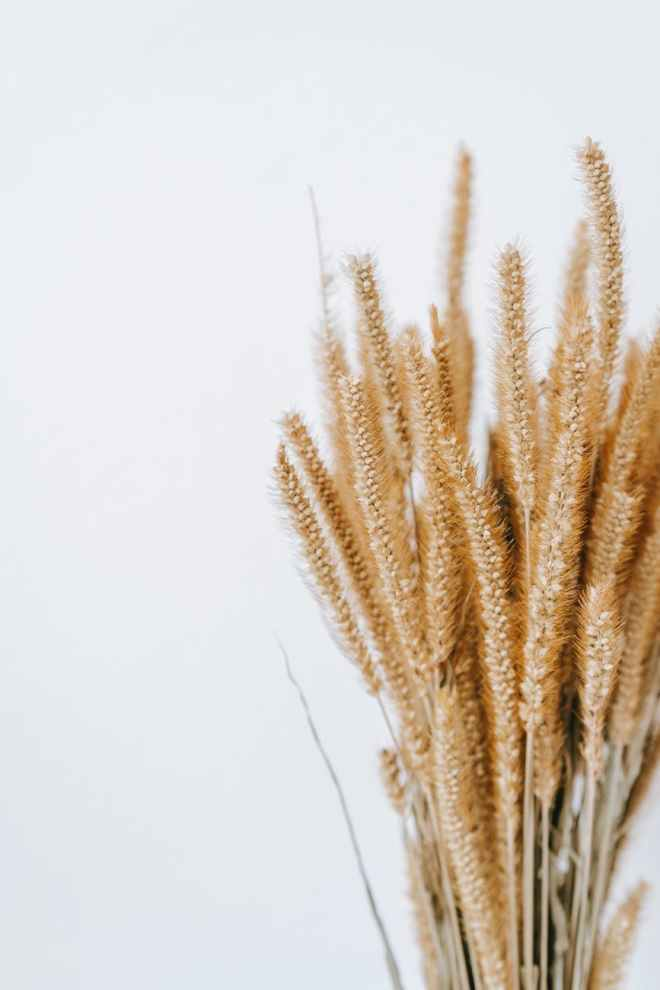 dry wheat against light wall