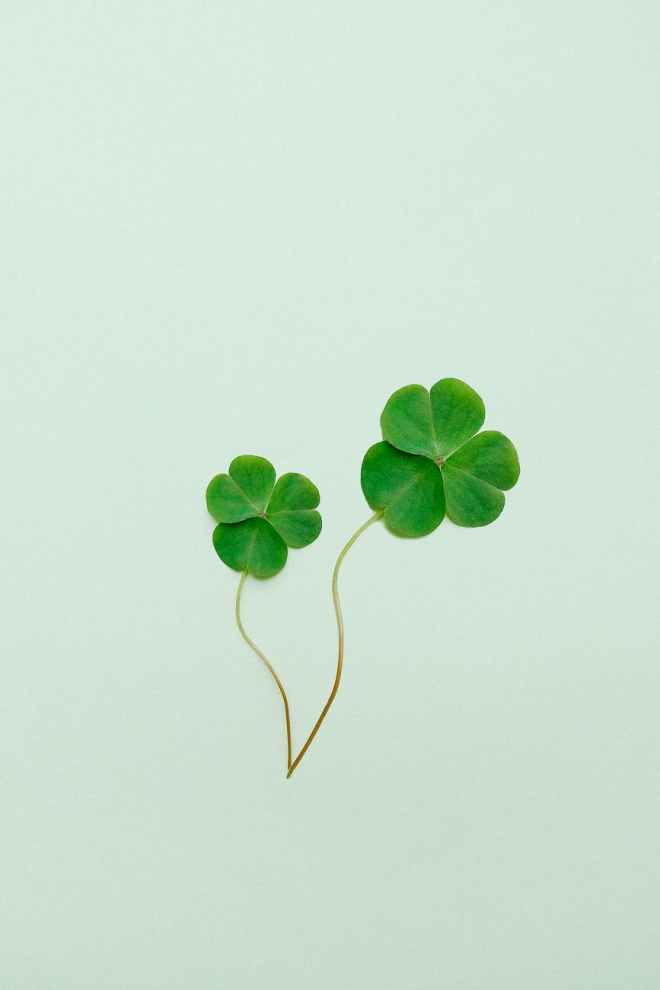 clover on green surface