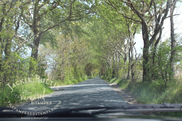 back road to the tulip fields