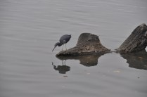 Birds and water also make me reach for my camera.