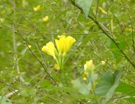 Forest flowers 8