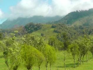 More green, lush hillsides