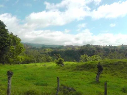 More lush green fields