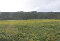 This looks like a meadow, but it's really a swamp and you can sink to your death in it.