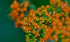 These shrubs were growing in the woods by the river. At first glance they looked like clusters of flowers, but on closer look I discovered they were tiny berries.