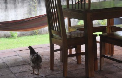 Chickens and cats were common underfoot, but the cats were better at begging.