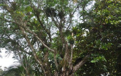 As in our area, every tree and available growing surface has something else growing on it.