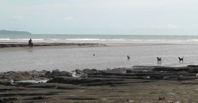 A boy came down the beach on his horse and the dogs all went nuts. When he came ashore on our side though, they kept their distance probably seeing the horse was quite a bit bigger than they were.