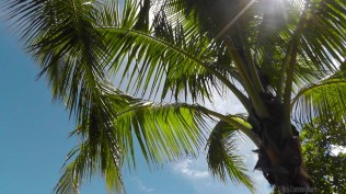 We're under the palm trees enjoying the morning.