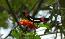 A butterfly lands on some flowers outside my gate.