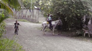 Walking back from the supermarket, we passed this guy on his horse.