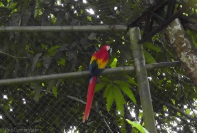The macaws were making a heck of a racket.