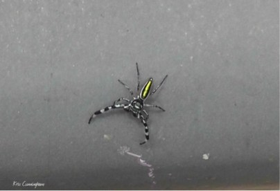 Of course no day would be complete without an interesting bug. This beautiful little spider was on a bridge railing.