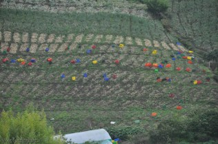 We saw these colors from a distance, and it wasn't until I downloaded this photo taken with my zoom lens that I realized they were plastic crates. It looks like they had dug potatoes which were laying on the ground waiting to be packed up.