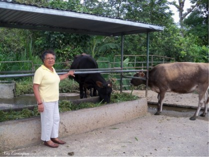 Cedo with a couple of her cows